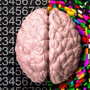 نیم کره های مغز انسان