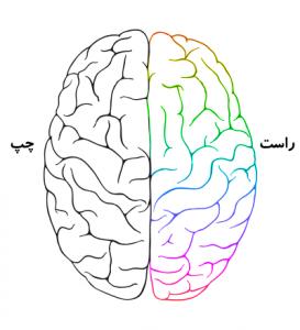 نیم کره های مغز
