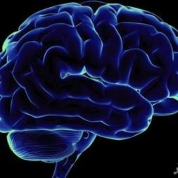 شگفتی های مغز انسان