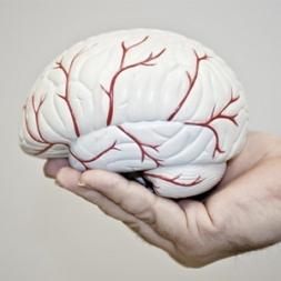 چطور از مغزمان مراقبت کنیم؟